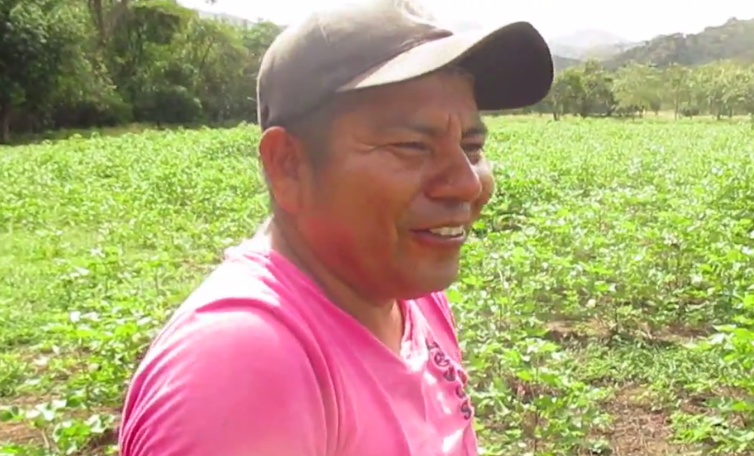 Miguel Verú, Indigenous Leader on organic cotton experimental field, Natagaima, Colombia 2015
