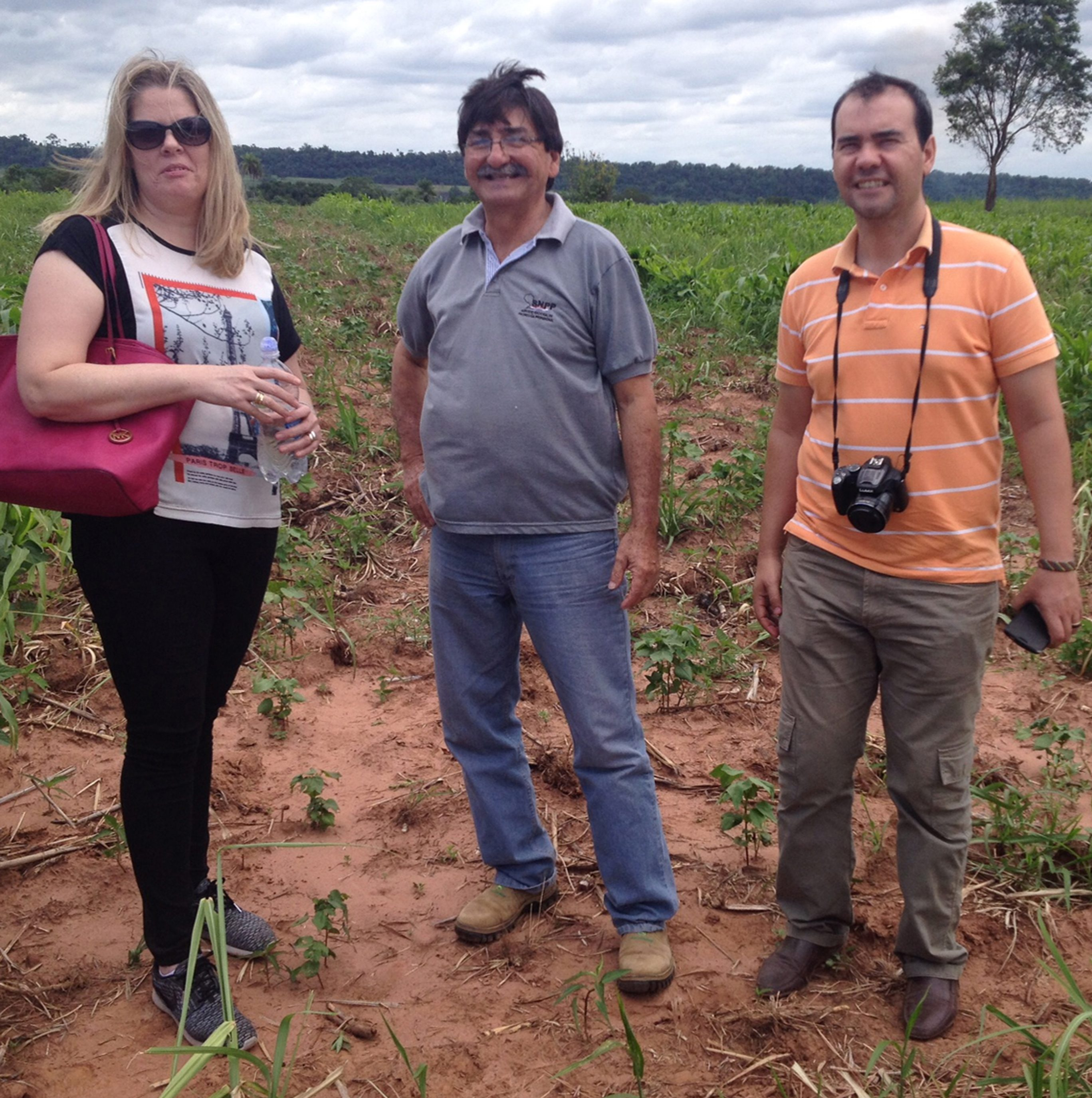 Organic cotton cropping field test of Lansol, Villarica, Paraguay, 2016
