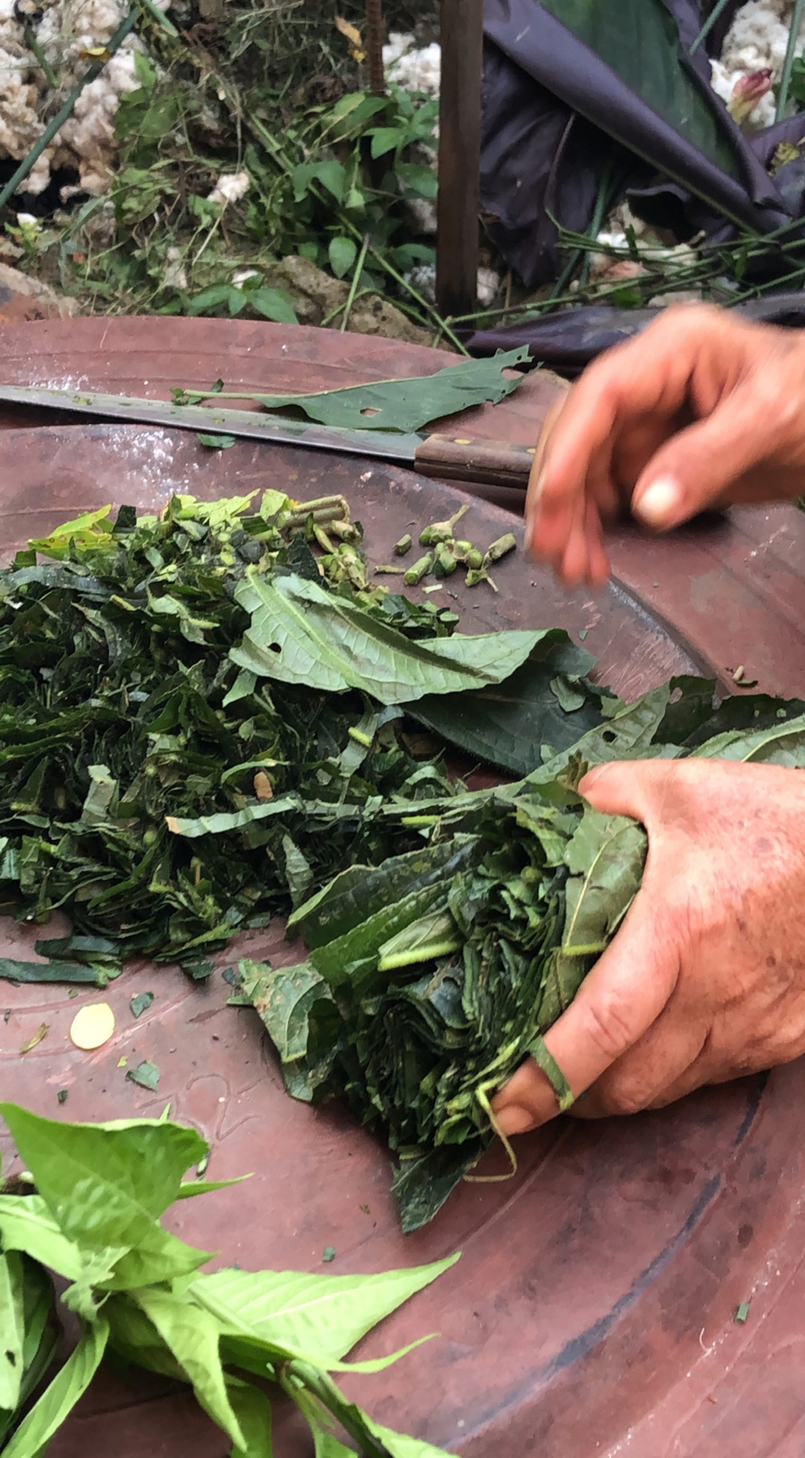 Preparing the natural tint at Corporación del Lienzo, Charalá, Santander, Colombia, 2018